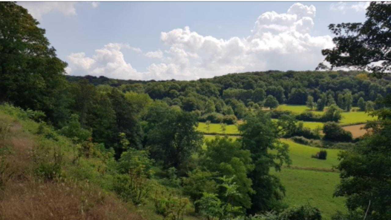 Pittige herfstwandeling heuvelland Z-Limburg